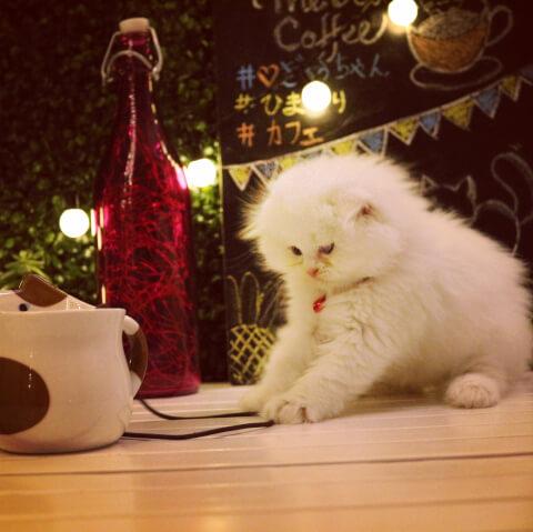 white_cat_in_restaurant