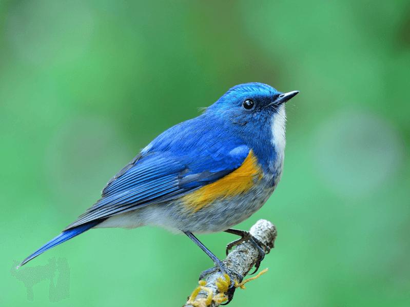 日本にはどんな野鳥がいるの?エリアごとに分けて野鳥の種類や見分け方 ...