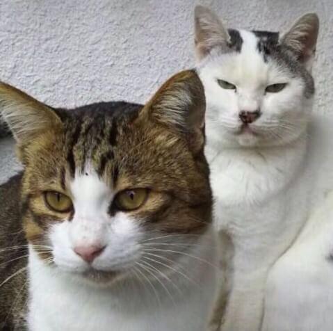 猫 ねこちゃん 猫の写真ヘタクソ選手権