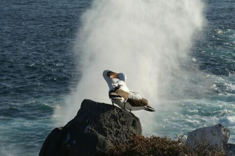 アホウドリ 日本 野鳥 種類 鳴き声 青 一覧