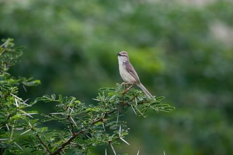 ウグイス 日本 野鳥 種類 鳴き声 青 一覧