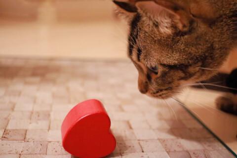 猫とハート