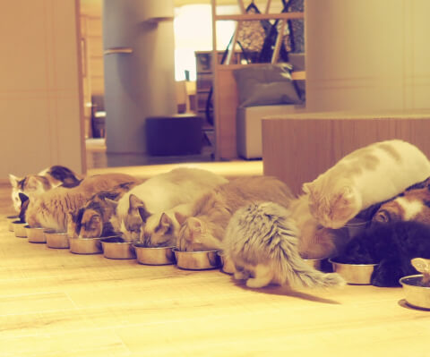 ごはんを食べる猫たち