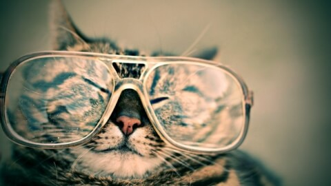 Happy cat wearing huge eyeglasses