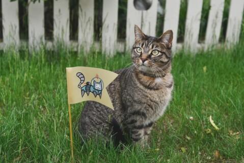 feline flag cat