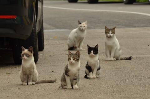 many cat
