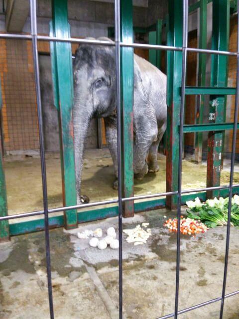 井の頭動物園