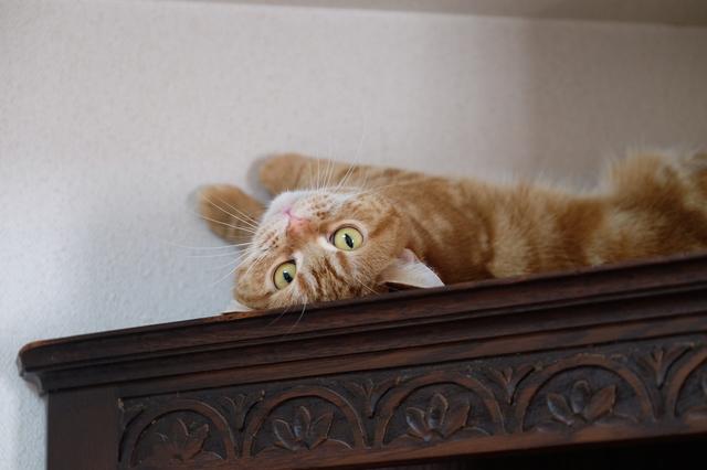 猫の落ち着く場所