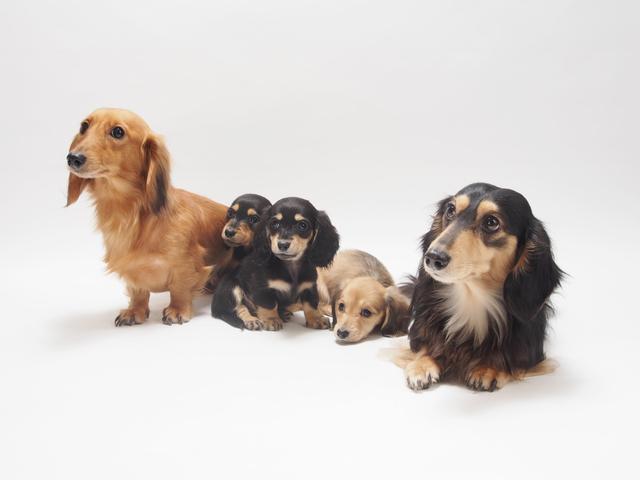犬 ドッグフード 成長期