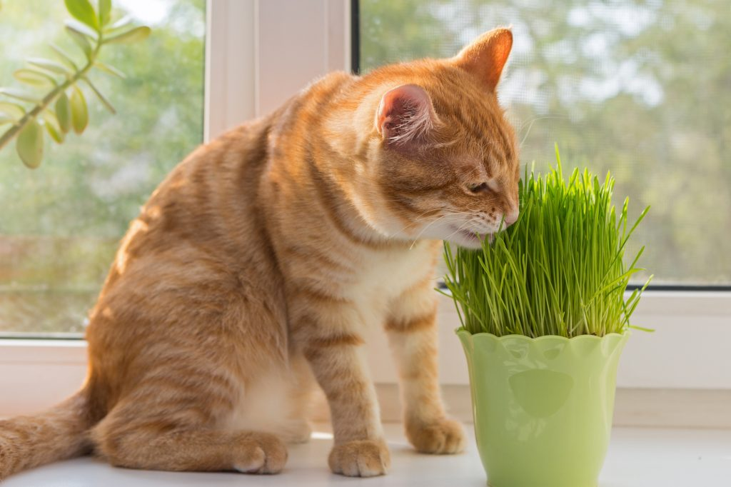 Cat and vase of fresh catnip