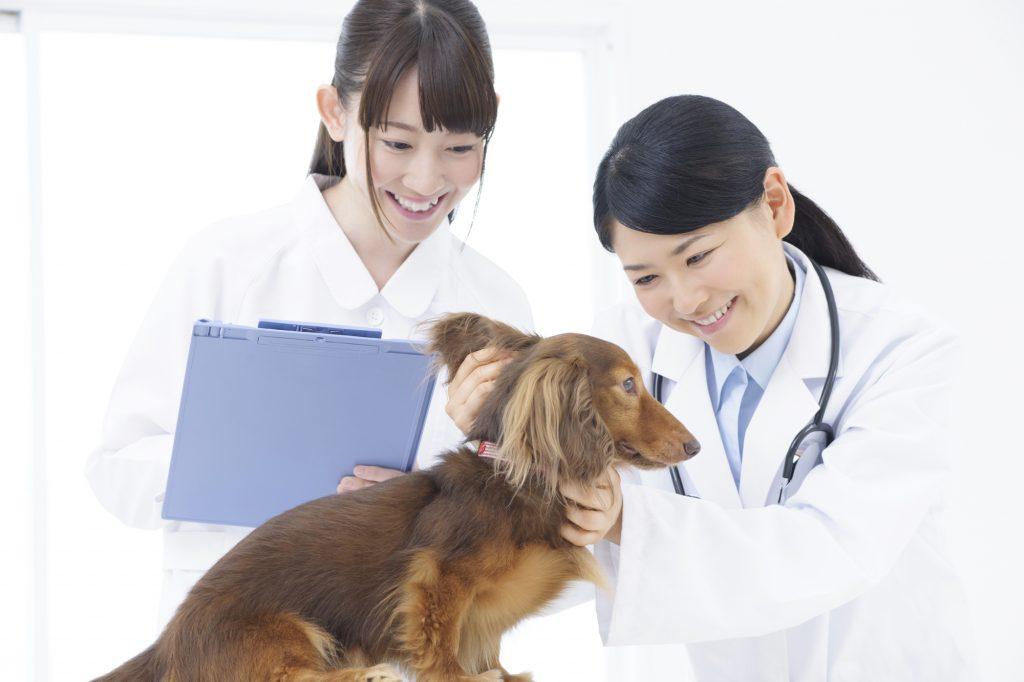 ペット 定期健診