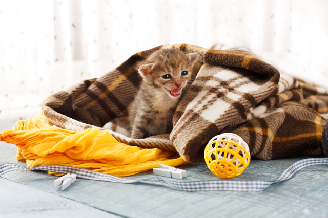 Grey striped newborn kitten in a plaid blanket
