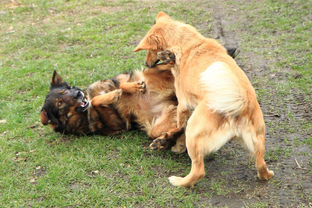 犬 いじめ 喧嘩