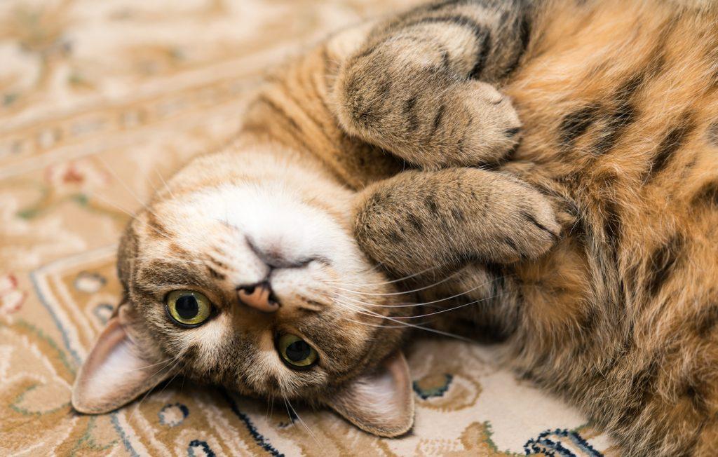猫 甘える 留守番