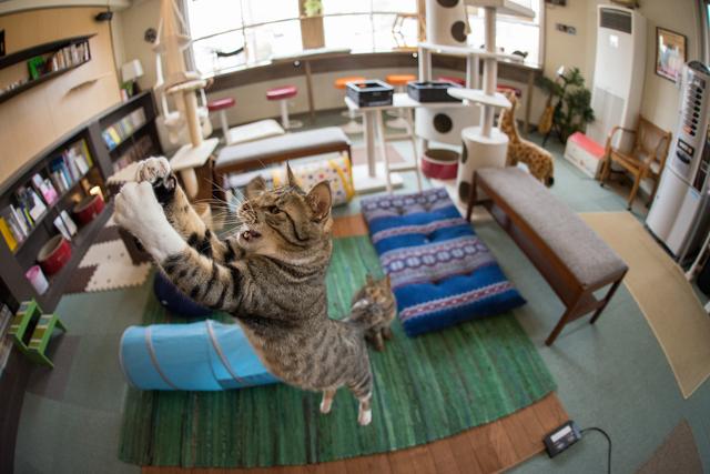 猫 跳ねる