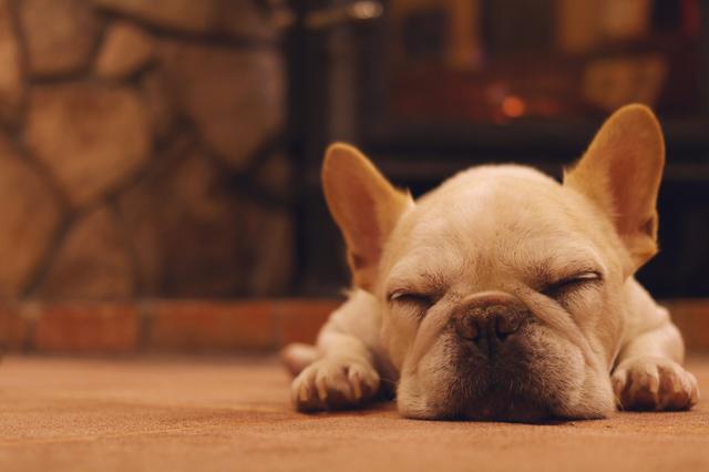 犬 冬 かかりやすい病気