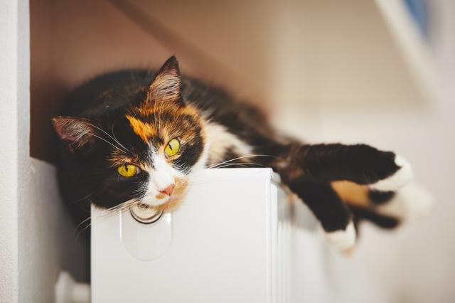 猫 病気 見分け方
