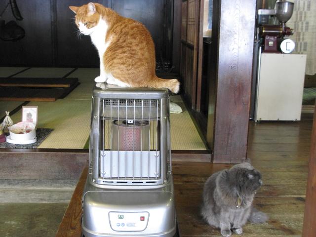 猫 暖房 設定温度