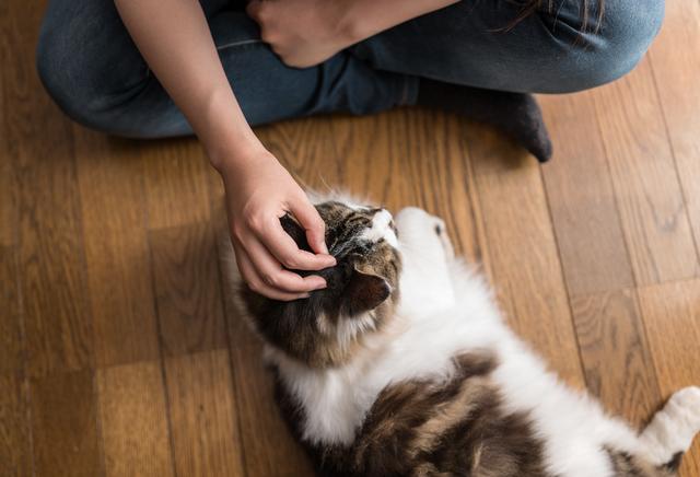猫 目やに 取り 方