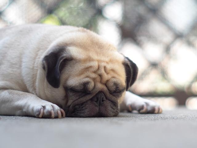 愛犬 オナラ 臭い