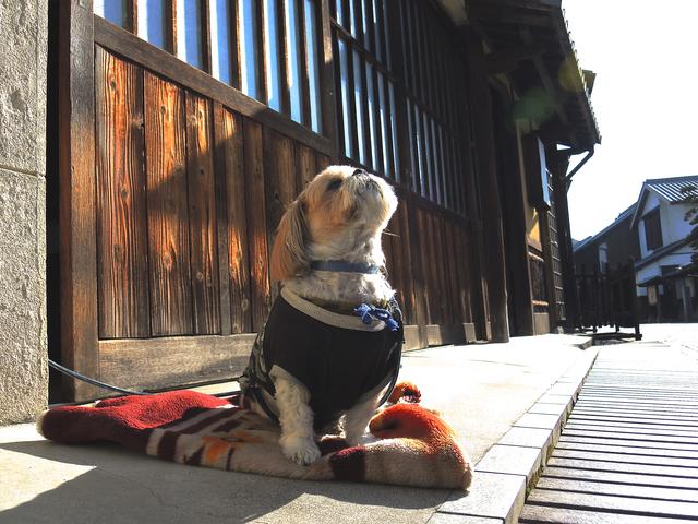 日向 ペット 犬