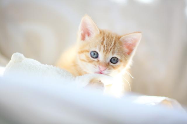 pixta_kitten1