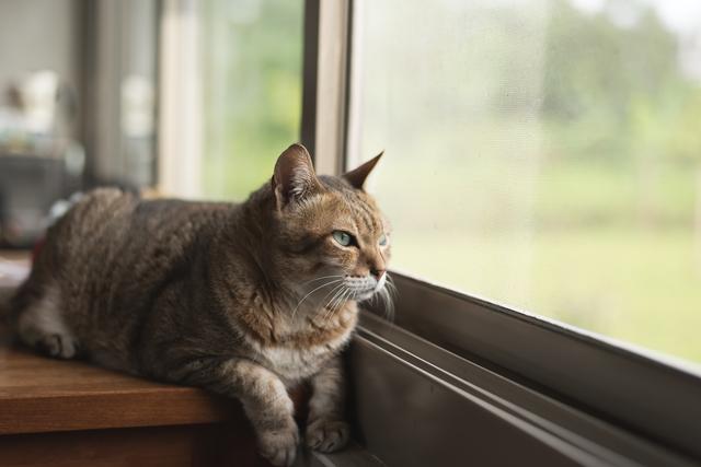 tabby cat sit near the window