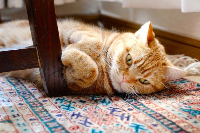 猫 腎不全 口臭