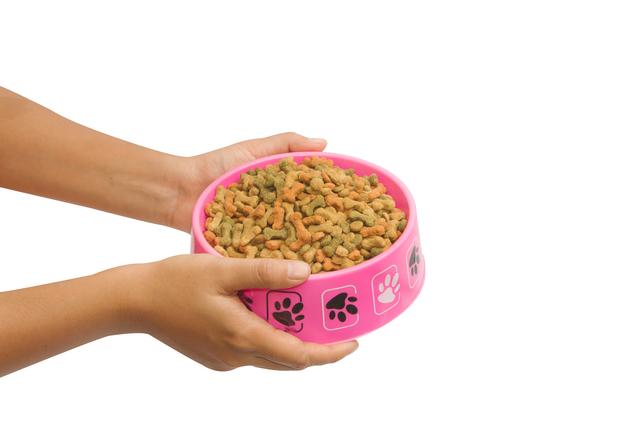 Hand feeding dog food, isolate