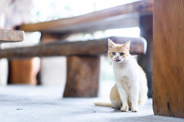 猫の目 悪い