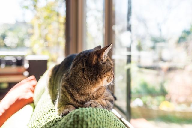 春 猫 世話 仕方