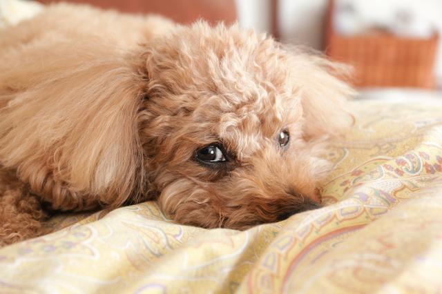 犬 夏 温度 湿度