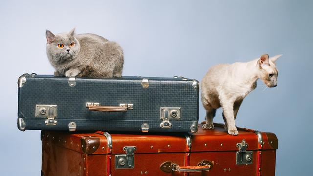ペット 旅行