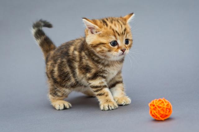 猫 誤飲 誤食