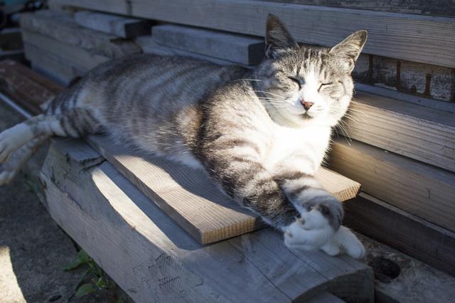猫 迷子対策