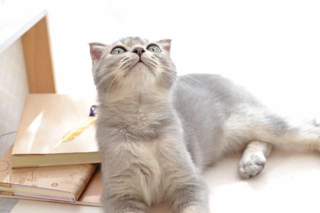 猫 梅雨 室内環境