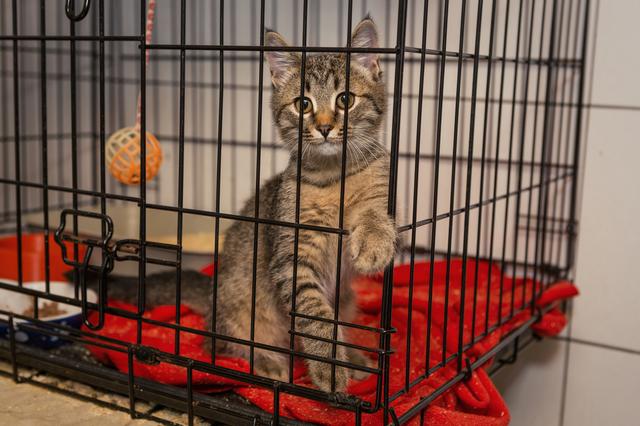 Little kitten in the shelter