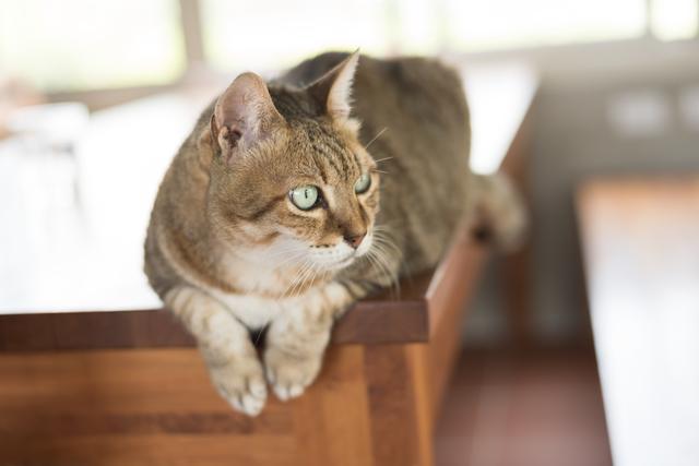 猫 レバー 平気