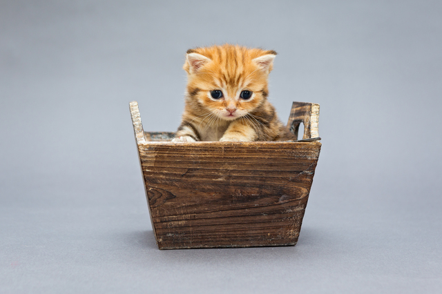Little kitten  sits in a wooden box