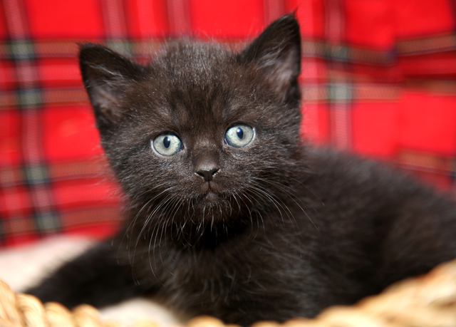 Funny baby cat kitten in wicker basket