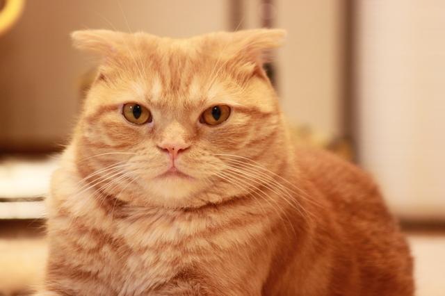 猫 瓜実条虫症 原因