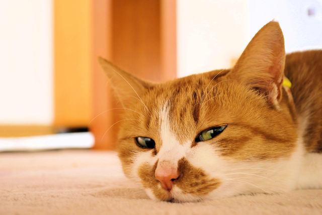 猫 おやつ あげかた