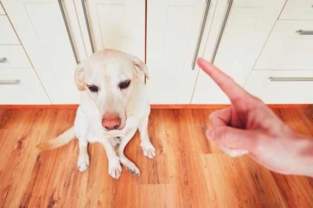 犬 噛む どうして