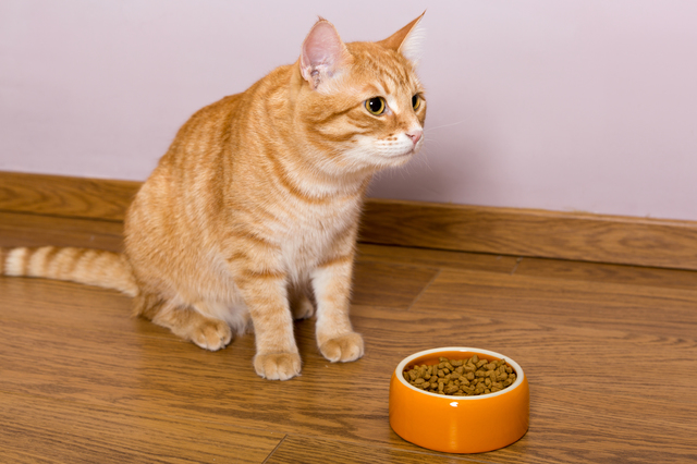 Red cat and bowl of dry food