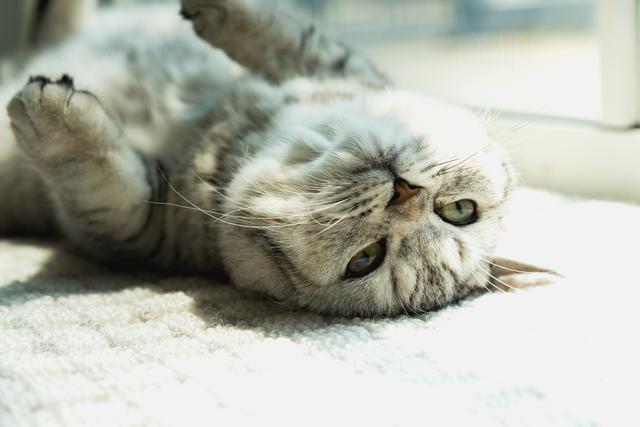 猫 リラックス 動作