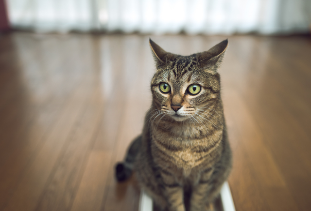 猫 おしっこ 布団 理由