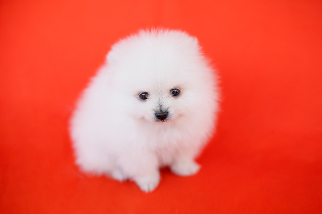 犬 ボディランゲージ