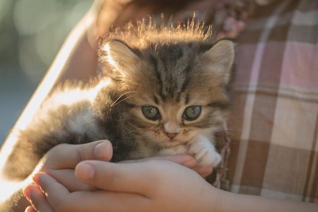 猫 赤ちゃん 育て方