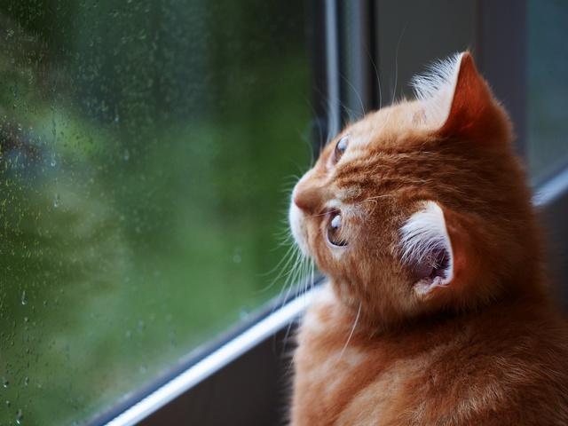 猫 梅雨 お世話