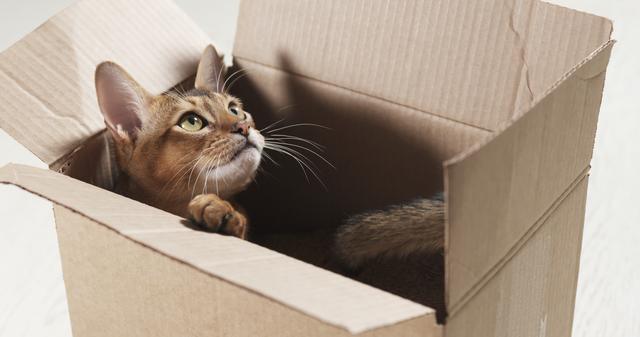 猫 箱に入る なぜ
